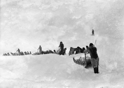 A historic photograph showing a group of Inughit traveling over sea and ice by dog sled in a train-like formation