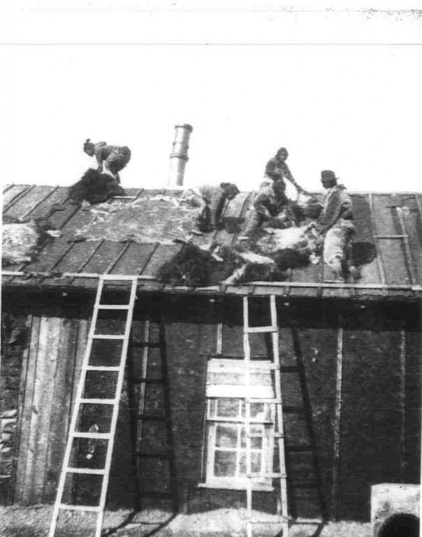 A historic photograph showing five Inughuit on the roof of the abandoned Greely expedition house laying out animal skins to dry.