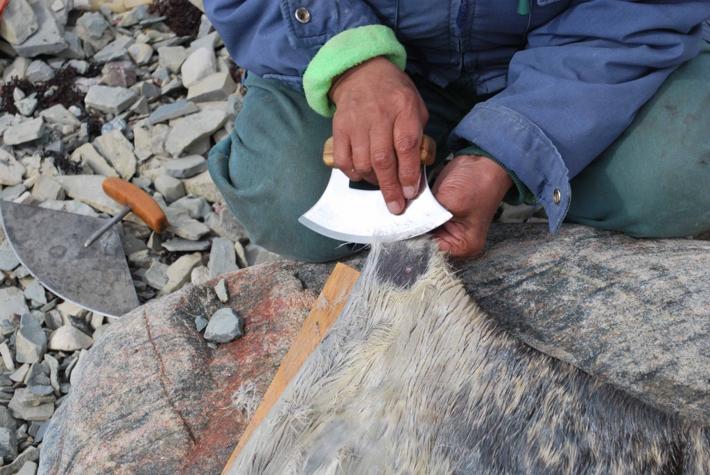 A photograph showing an Inuit woman using an ulu knife to scrape the hair off of hide, which will be used to make boots.